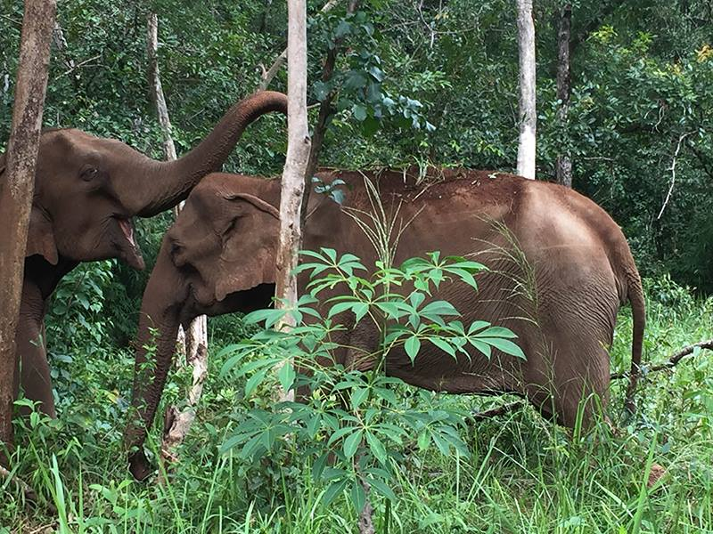 Elephant Sanctuary Mondulkiri Project